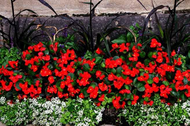 Flowers10Small.jpg
