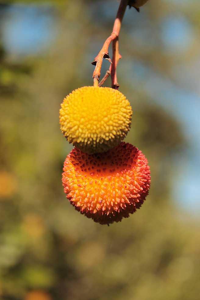 FruitsSmall.jpg